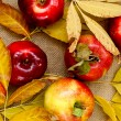 Red fresh apples — Stock Photo #55484097