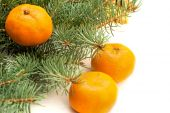 Tangerines on a background of fir branches — Stockfoto
