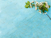 Sprig of cherry blossoms on a wooden background — Stock Photo