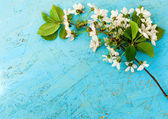 Sprig of cherry blossoms on a wooden background — ストック写真