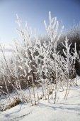 árvores no inverno — Foto Stock