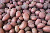 A pile of potatoes just dug from the ground — Stock Photo