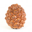 One pine cone isolated. White background. — Stock Photo #60172369