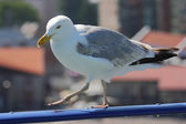 Seagull standing in the harbor — Stock Photo