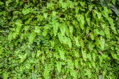 Young fern leaf. — Stock Photo