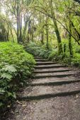 Pathway in the forest. — Stock Photo
