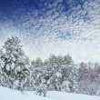 New Year tree in winter forest. Beautiful winter landscape with snow covered trees. Trees covered with hoarfrost and snow. Beautiful winter landscape. Snow-covered tree branch. Winter background. — Stock Photo #60668815