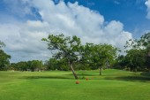 Golf course in Dominican republic. field of grass and coconut palms on Seychelles island. — Stock Photo