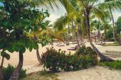 Relaxing on remote Tropical Paradise beach in Dominican Republic, Seychelles, Caribbean, Mauritius, Philippines, Bahamas. — Stok fotoğraf
