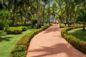 Green exotic garden. dominican republic. Pathway in tropical park - abstract travel background. — Stock fotografie