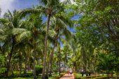 Green exotic garden. dominican republic. Pathway in tropical park - abstract travel background. — Foto de Stock