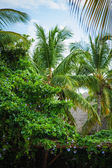 Wild caribbean beach. Dominican republic. tropical sand beach in dominican republic. tranquil resort. Palm trees on the tropical beach, Caribbean Sea. beach in sunset time on island in Seychelles — Stock Photo
