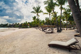 Palm and tropical beach in Tropical Paradise. Summertime holiday in Dominican Republic, Seychelles, Caribbean, Philippines, Bahamas. Relaxing on remote Paradise beach. Luxury Resort on Atlantic ocean. — Стоковое фото
