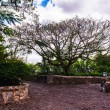 Road in park. Ancient village Altos de Chavon - Colonial town reconstructed in Dominican Republic — Stock Photo #71734891