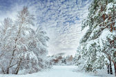 Snow-covered forest road, winter landscape. Cold and snowy winter road with blue evergreens and grey clouded skies. Christmas and New Year Tree. — Stock Photo