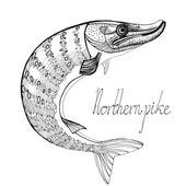 Hand drawn northern pike — Stock Vector