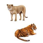 Panthera leo and Bengal Tiger — Stock Photo
