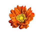 Very beautiful bright orange flower — Stock Photo