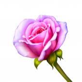 Fiore rosa rosa — Foto Stock