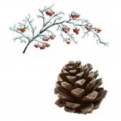 Pine cone and branches with rowanberris — Stock Photo