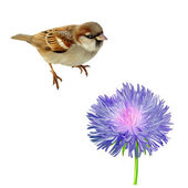 House Sparrow and flower — Stock Photo