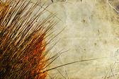 Autumn dry grass sedge — Stock Photo