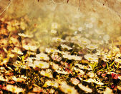 Flores de manzanilla en campo — Foto de Stock