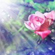 Pink rose with dew drops — Stock Photo #60780019