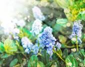 Güzel mavi çiçekler — Stok fotoğraf