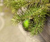 Décoration de Noël et de branches d'arbres sapin — Photo