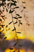 Branches with little leaves — Stock Photo