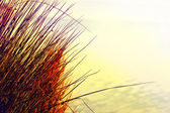 Autumn dry grass — Stock Photo