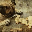 Pug dog with holiday cookies — Stock Photo #60908807