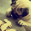 Pug dog with holiday cookies — Stock Photo #60909085