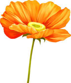 Tender pink poppy flower — Stock Vector