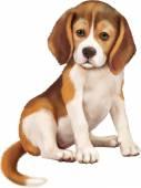 Beagle puppy — Stock Vector