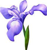 Violett iris blomma — Stockvektor