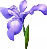 Flor de íris violeta — Vetor de Stock