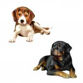 Rottweiler dog and beagle puppy — Stock Photo