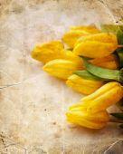 Valentine tulipány pozadí — Stock fotografie
