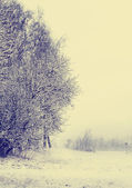 Winter nature landscape — Stock Photo