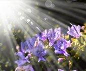 Keře s květy fialové — Stock fotografie