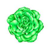 Green Rose Flower — Stock Photo