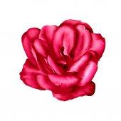 Kırmızı camelia çiçek — Stok fotoğraf