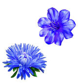 Aster and Blue Spring flower — Stock Photo