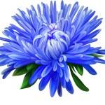 Blue Aster flower — Stock Vector #69815383