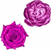 美丽明亮的粉红色玫瑰 — 图库矢量图片