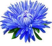 Fiore blu aster — Vettoriale Stock