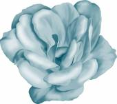 青椿の花 — ストックベクタ