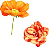 Two Red Flowers — Stock Vector